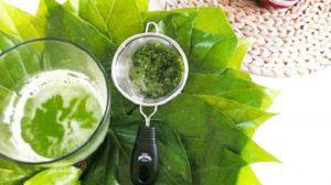 Tắm lá bàng có tác dụng gì và cách chữa bệnh từ lá bàng