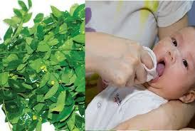 Những tác dụng khi tắm lá rau ngót cho trẻ sơ sinh mà nhiều mẹ chưa biết